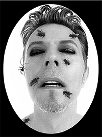 Bowie's face covered by flies